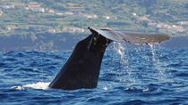 Whale Watching, Terceira, 4WD, ATV & Off-Road Tours