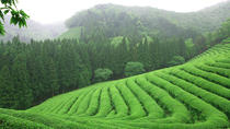 Boseong Green Tea Festival from Seoul, Seoul, Cultural Tours