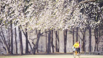 Day Trip to Nami Island with The Garden of Morning Calm, Seoul, Day Trips
