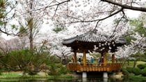Full day Gyeongju Cherry Blossom Festival Tour, Busan, Day Trips