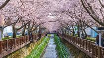Full-Day Jinhae Cherry Blossom Festival Tour, Busan, Full-day Tours