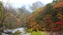 Nami Island & Mount Seorak Day trip from Seoul, Seoul, Day Trips