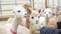 Relaxing Chuncheon City Day Tour with Alpaca World, Gangwon, Full-day Tours