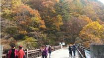 Scenic Jiri Mountain One Day Tour, Busan, Day Trips