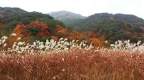Spectacular Juwang Mountain One Day Tour, Busan, Day Trips
