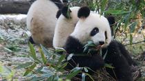 Giant Panda and Buddha 1 day tour, Chengdu, Day Trips