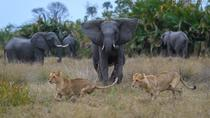 Chobe Game Drive, Kasane, Private Sightseeing Tours