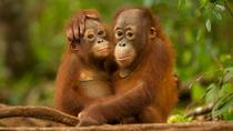 DAY TRIP ORANG-UTAN SEPILOK AND CITY TOUR, Kota Kinabalu, Day Trips