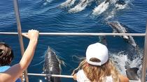 Dolphin Watching by Catamaran from Lagos, Lagos, Dolphin & Whale Watching