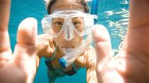 Snorkel with Turtle (Boat trip included) in Costa Adeje, Tenerife, Snorkeling