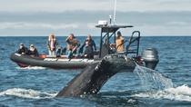Six Passenger Whale Watching and Coastal Tour, Newport Beach, Day Cruises
