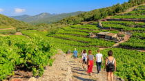 Small-Group Food & Wine Tasting Experience from Dubrovnik, Dubrovnik, Wine Tasting & Winery Tours
