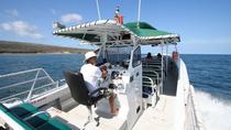 Kaanapali Ocean Adventures - Sanity Snorkel Vessel Private Charters, Maui, Custom Private Tours