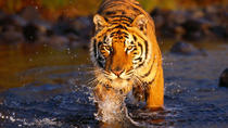 Private 3-Day Ranthambore National Park Tour from Delhi, New Delhi
