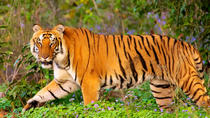 Private Corbett National Park & Nainital Tour from New Delhi, New Delhi, Attraction Tickets