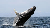 San Diego Whale Watching Sailboat Cruise, San Diego, Dolphin & Whale Watching