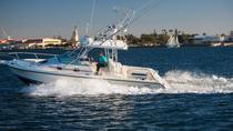 San Diego Whale Watching Speedboat Cruise, San Diego, Dolphin & Whale Watching