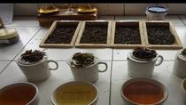 An Excursion into the World of the famous Darjeeling Tea, ダージリン