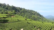 Full Day Tour Of Munnar With Lunch, Kochi, Full-day Tours