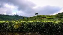 Full Day Trekking Tour In Munnar, Munnar, 4WD, ATV & Off-Road Tours