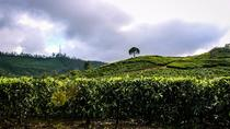 Full Day Trekking Tour In Munnar With Refreshments, Munnar, 4WD, ATV & Off-Road Tours