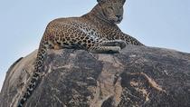 Narlai Leopard Safari and Village Walk, Udaipur, 4WD, ATV & Off-Road Tours