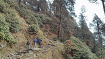 Nature Trek From Dharamshala, Dharmasala, Hiking & Camping