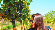 Vineyard Tour to Beautiful Nandi Hills including Wine Tasting and Private Transfer, Bangalore, Wine ...