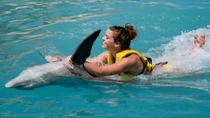 Cozumel Dolphin Swim and Ride Program, Cozumel, Swim with Dolphins