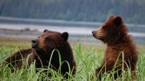 Exclusive Pack Creek Bear Viewing from Juneau, Juneau, null