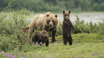 Juneau Shore Excursion: Exclusive Pack Creek Bear Viewing from Juneau, Juneau, Ports of Call Tours