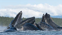 Paddle with Whales! Private Boat Charter, Juneau, Private Sightseeing Tours