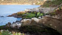 Ultimate Private San Diego Sightseeing Tour, San Diego, Nature & Wildlife