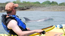 Small-Group Tour: 2-Hour Marsh Kayaking Eco-Tour in Charleston, Charleston, Night Cruises