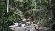 Gold Coast Mountains Tour Including Springbrook National Park and Mt Tamborine, Gold Coast, 4WD, ...