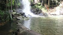 Private Day Tour including Lamington National Park or Mt Tambourine from Gold Coast: The Gold ...