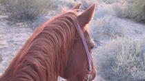Old Spanish Trail Horseback Ride with Lunch, Las Vegas, Horseback Riding