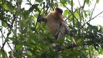 3-Hour Small Group River Safari and Brunei Proboscis Monkey Tour, Bandar Seri Begawan, Nature & ...