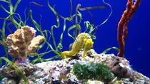 Algemeen entreebewijs voor de California Academy of Sciences, San Francisco, Attraction Tickets
