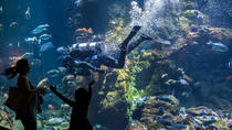 California Academy of Sciences General Admission Ticket, San Francisco, Attraction Tickets
