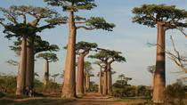 5 Day Tour Baobab Avenue Express from Antananarivo , Antananarivo, Cultural Tours