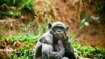 Bonobo Sanctuary Half-Day Tour (Lola Ya Bonobo), Democratic Republic of Congo, Day Trips