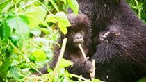 Gorillas Trekking and Nyiragongo Volcano in Virunga National Park, Kigali, Multi-day Tours