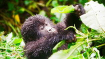 Gorillas Trekking and Nyiragongo Volcano in Virunga National Park