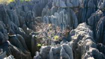 Grand Tsingy De Bemaraha and Baobab Avenue from Morondava 3 Day Tour, Madagascar, Multi-day Tours