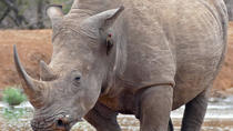 Hlane Royal National Park Day Tour, Maputo, Safaris