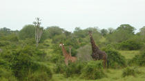 Kissama National Park Overnight Tour from Luanda: 2 days 1 night, Luanda, Nature & Wildlife