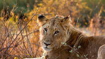 Kruger National Park - Open Vehicle - Day Tour, Maputo, Safaris