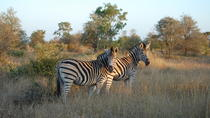 Kruger National Park - Open Vehicle - Day Tour