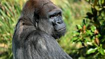 Lesio Louna Natural Reserve Gorillas - Bela Falls - 5 Day Tour From Brazzaville, Congo, Multi-day ...